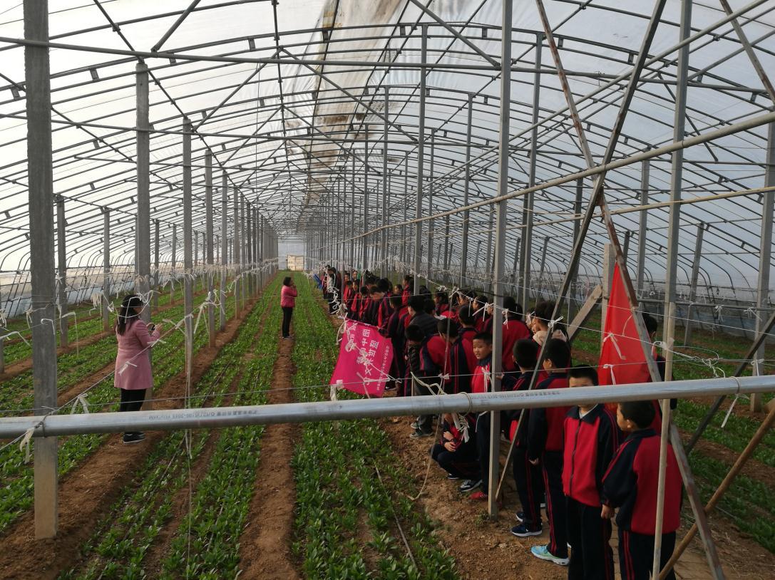凤凰镇召口中学到公司拓展训练基地实践|企业新闻-山东众得利现代农业发展有限公司