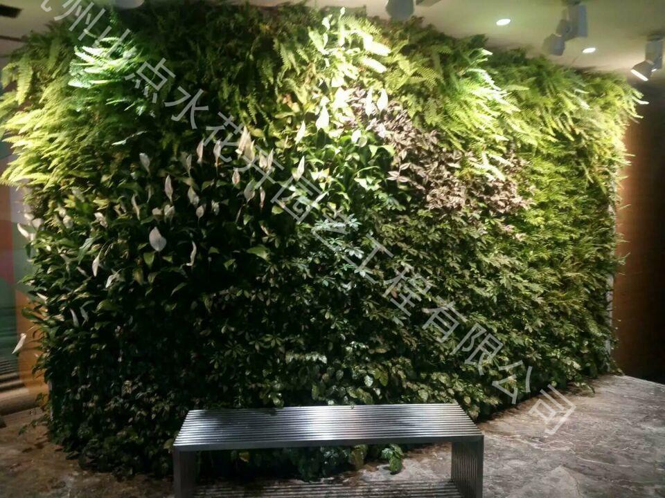 室内植物墙|活体植物墙-杭州山点水花卉租赁园艺工程有限公司