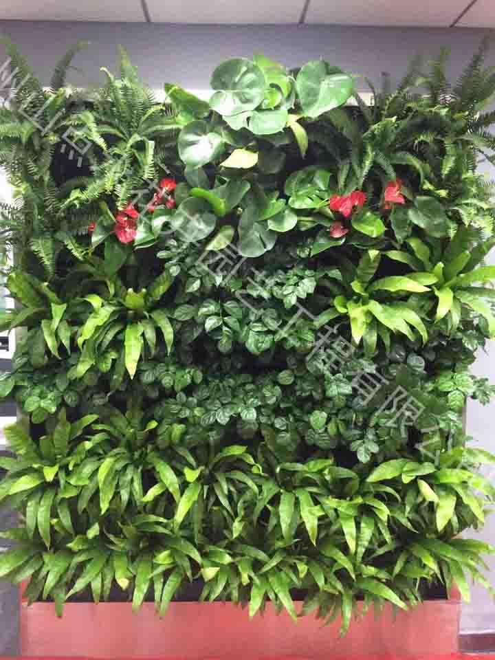 植物墙 活体植物墙-杭州山点水花卉租赁园艺工程有限公司