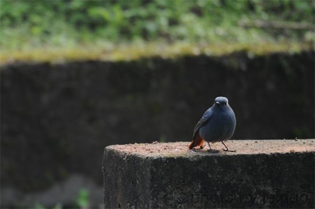 自由的鸟儿,你好!|新闻摄影-成都精洁利来科技有限公司