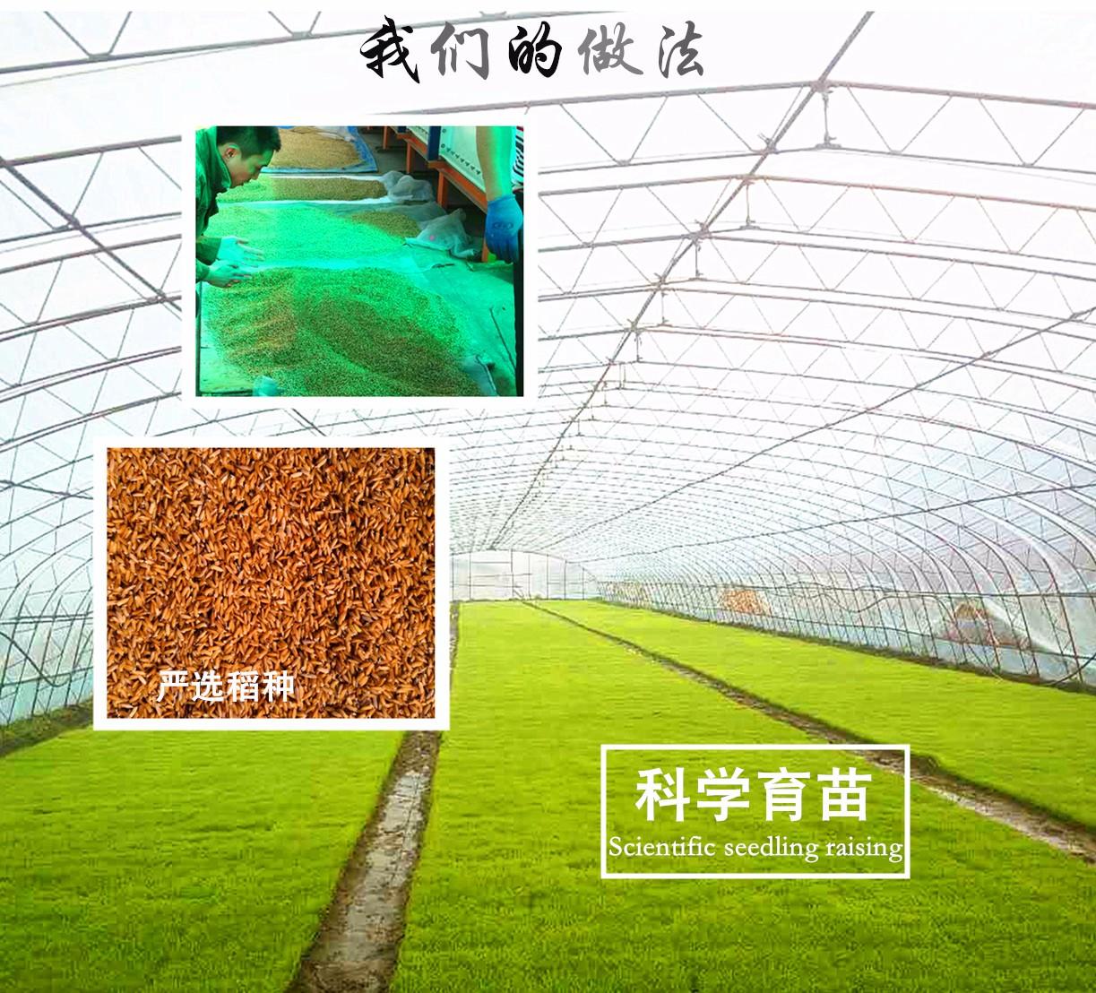 东北大米礼盒 5kg正宗五常大米 精品有机稻花香大米|金典百粒臻-哈尔滨臻品农业科技发展有限公司