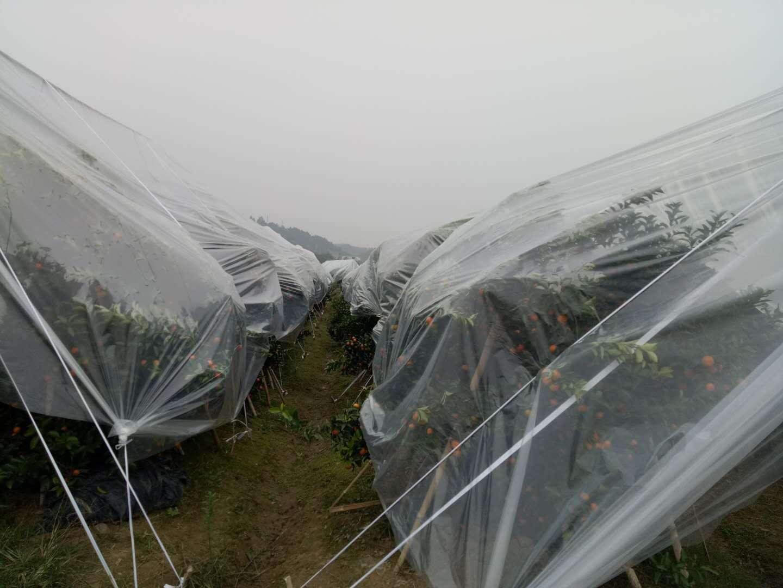 砂糖桔专用长寿防寒膜|农膜-贵州晟和兴塑业有限公司