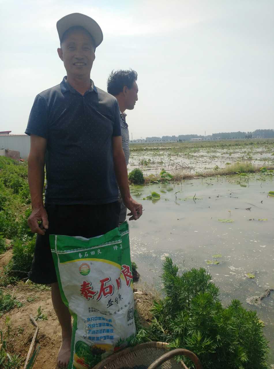 莲藕施用益生源中微量元素菌肥的效果|田间地头-南阳市益生源肥业有限公司