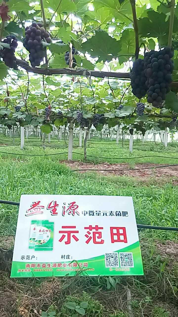 果树上施用益生源中微量菌肥的效果|田间地头-南阳市益生源肥业有限公司