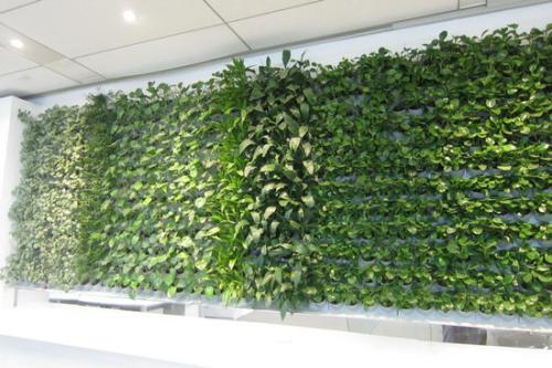 植物墙模块