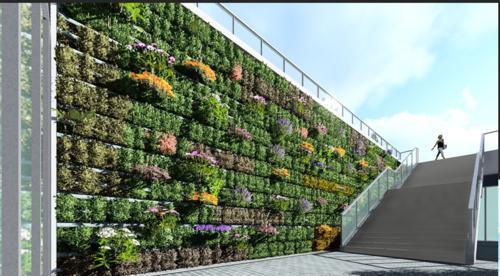 垂直绿化植物