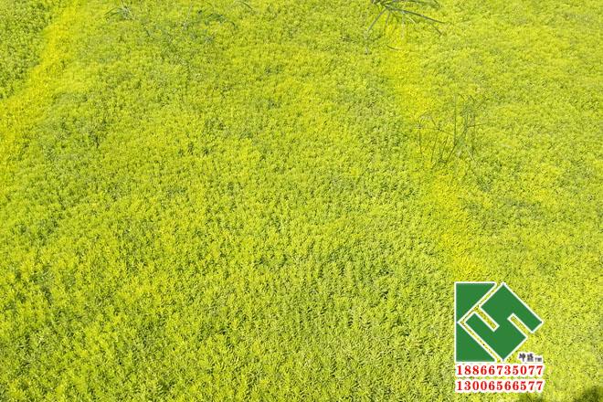屋顶绿化|绿化工程-青州市坤盛花卉苗木有限公司