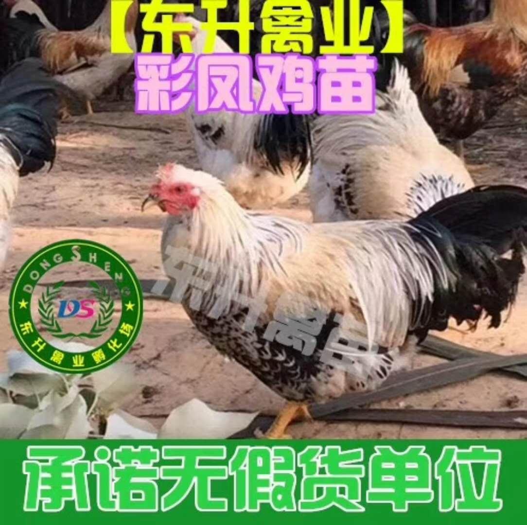 彩凤龙8国际注册.jpg
