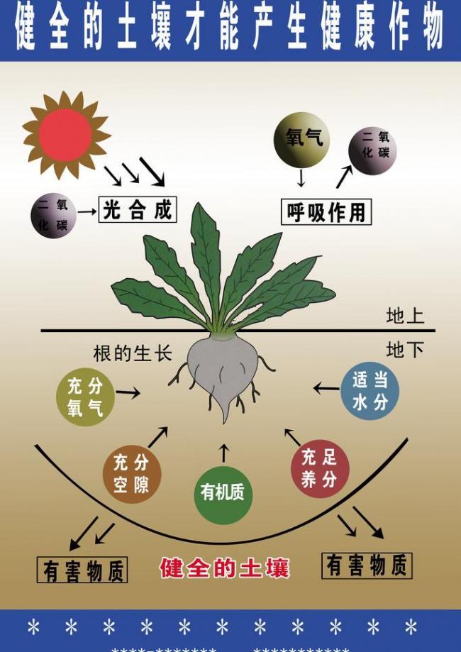 农药2.jpg