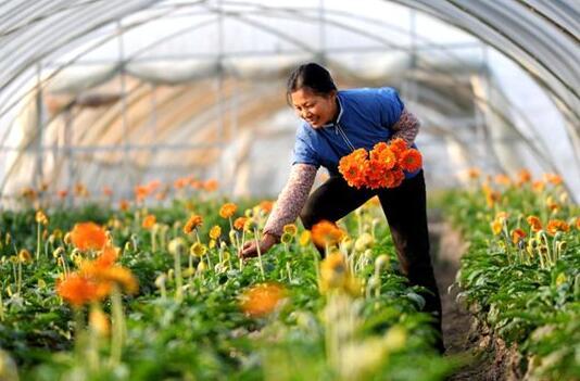 重庆职业学院花卉设计.jpg