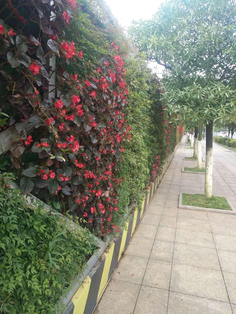 长效景观植物墙 (5).jpg