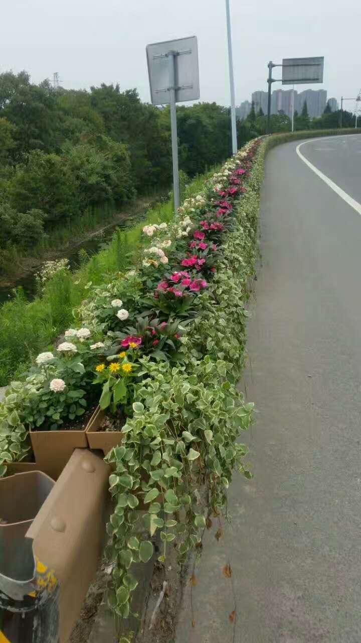 长效景观植物墙 (6).jpg