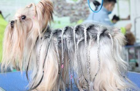 狗狗健康皮毛的样子